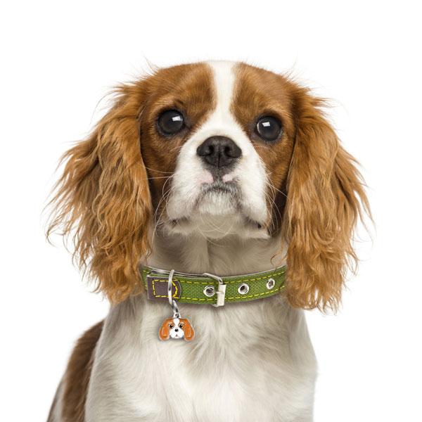 cavalier-king-charles-spaniel-blenheim-dog-tag-id-image-nm